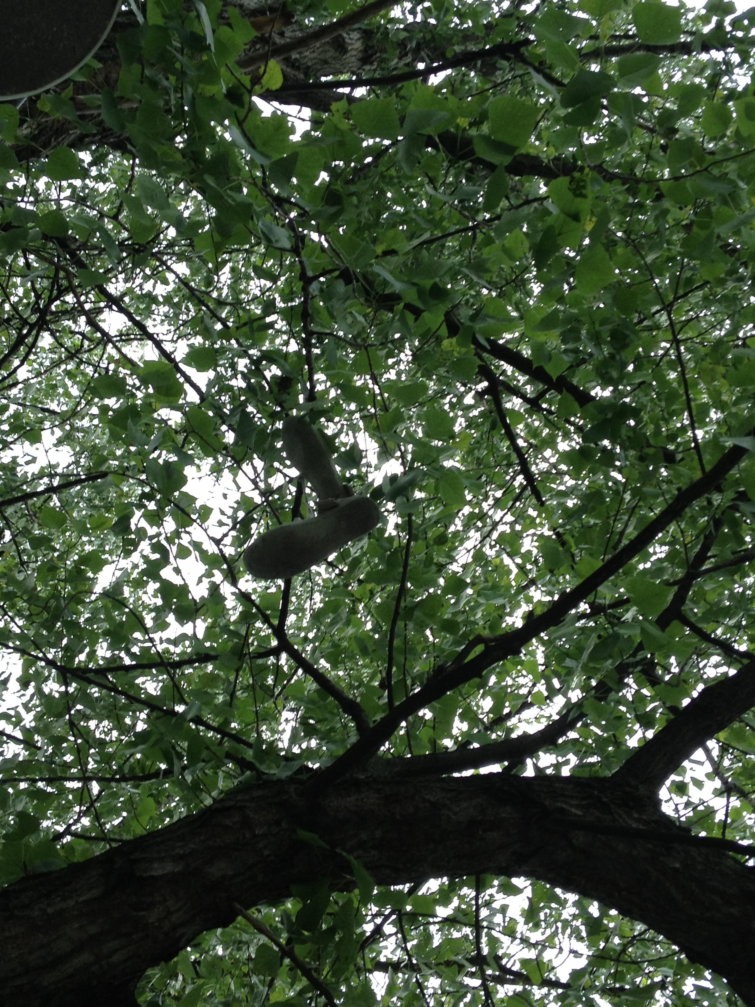 Scarpe trovate su un albero. Potrebbero essere uno scherzo finito male. Ma tirarle giù non sembra neppure impossibile...